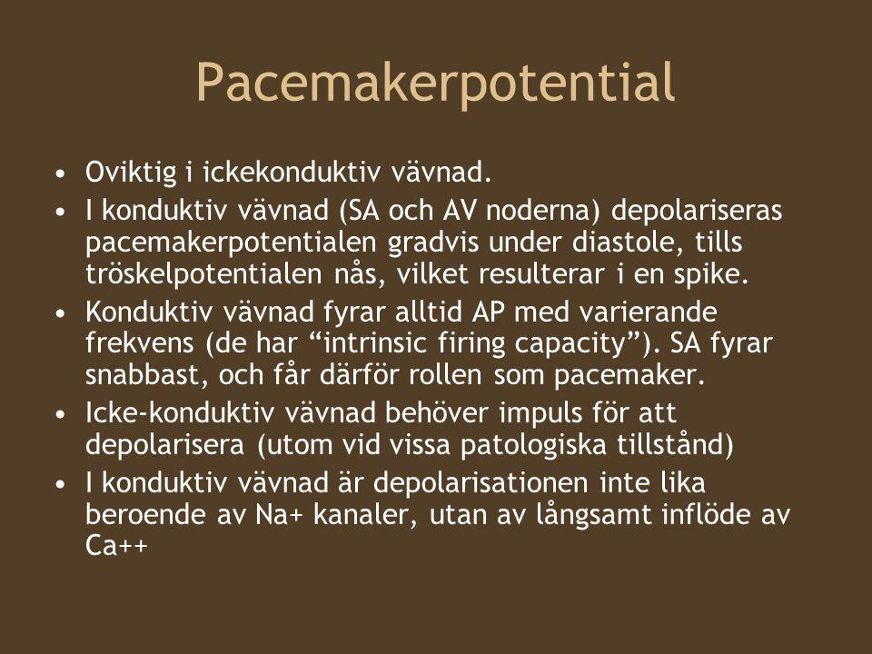 Pacemakerpotential Oviktig i ickekonduktiv vävnad. I konduktiv vävnad (SA och AV noderna) depolariseras pacemakerpotentialen gradvis under diastole, t
