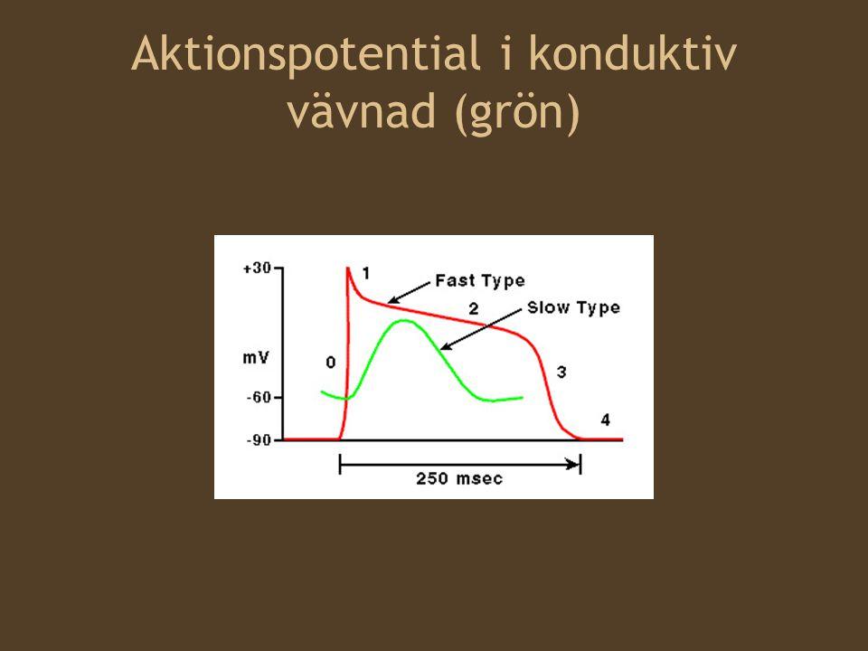 Aktionspotential i konduktiv vävnad (grön)
