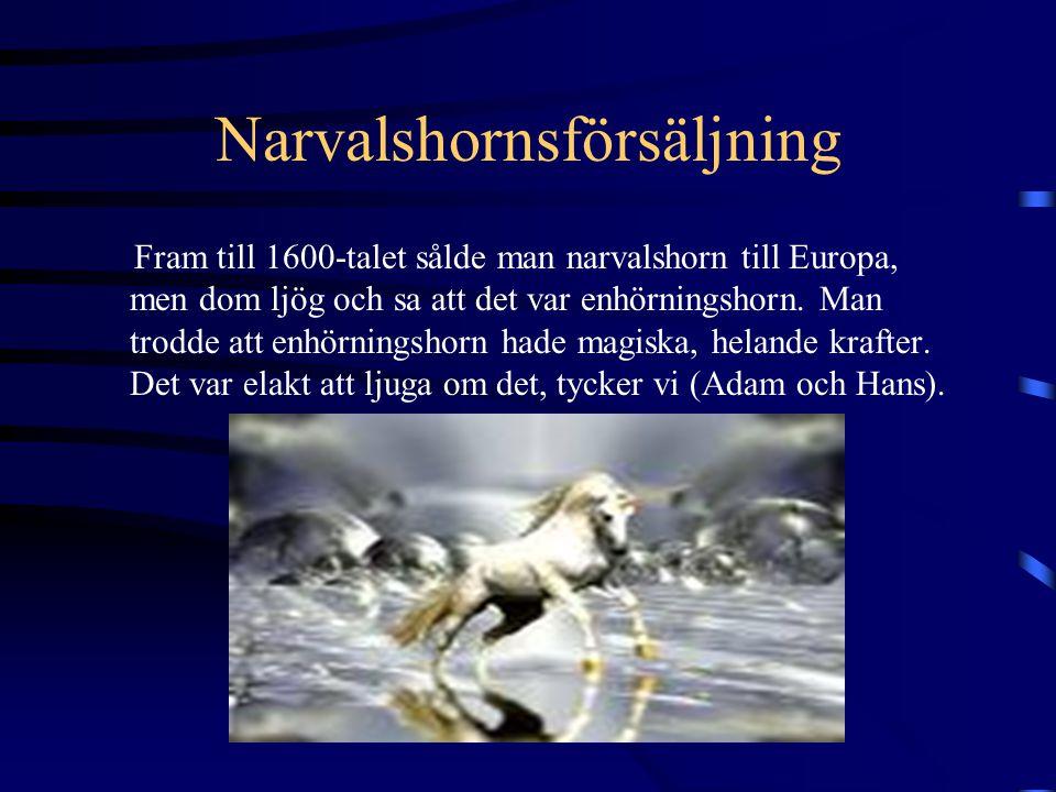 Narvalsjakt För att jaga narvalar måste man använda harpun och kajak och jakten är väldigt populär i Arktis.