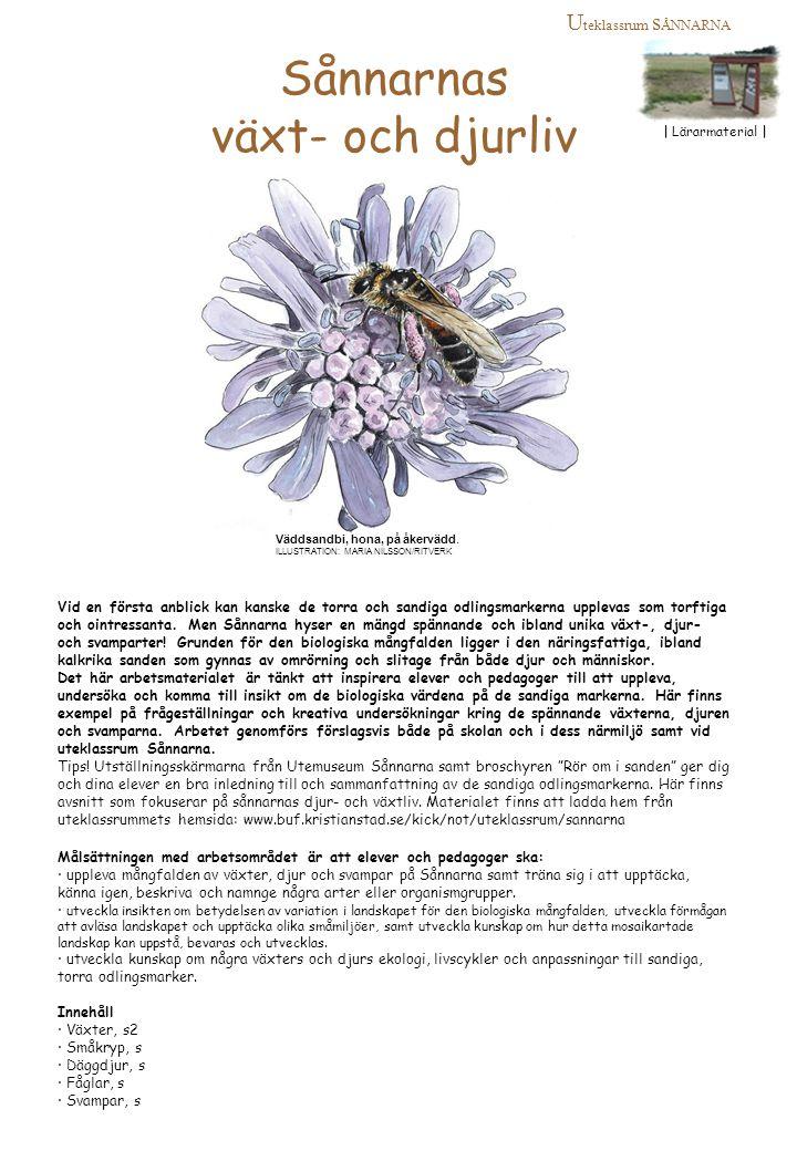 Fundera, Upptäck & Undersök Sandmarkernas växter Ordning och reda Inledning Att systematisera och ordna var en av många goda egenskaper Carl von Linné ägde.