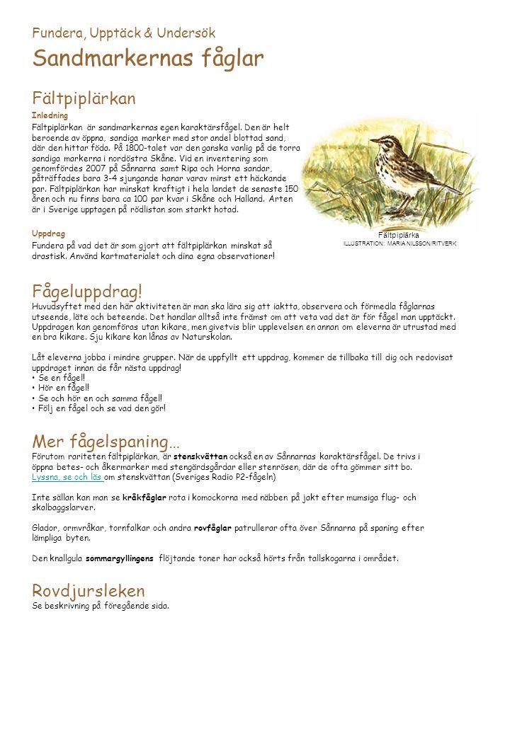 Fundera, Upptäck & Undersök Sandmarkernas fåglar Fältpiplärkan Inledning Fältpiplärkan är sandmarkernas egen karaktärsfågel.