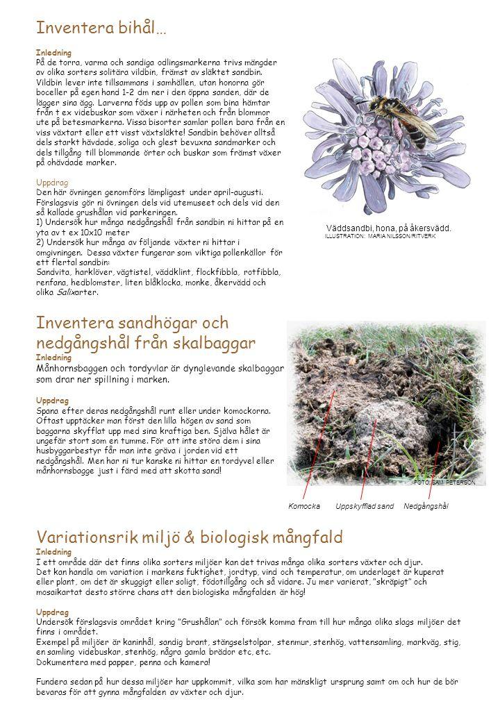 Inventera bihål… Inledning På de torra, varma och sandiga odlingsmarkerna trivs mängder av olika sorters solitära vildbin, främst av släktet sandbin.