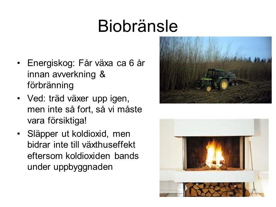 Biobränsle Energiskog: Får växa ca 6 år innan avverkning & förbränning Ved: träd växer upp igen, men inte så fort, så vi måste vara försiktiga! Släppe