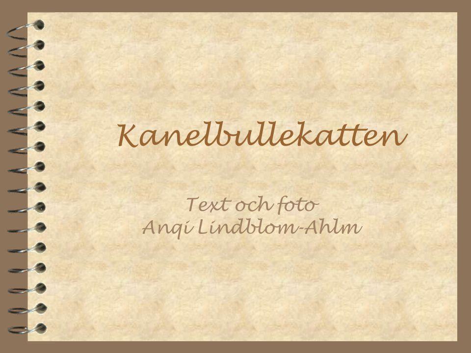 Text och foto Anqi Lindblom-Ahlm Kanelbullekatten