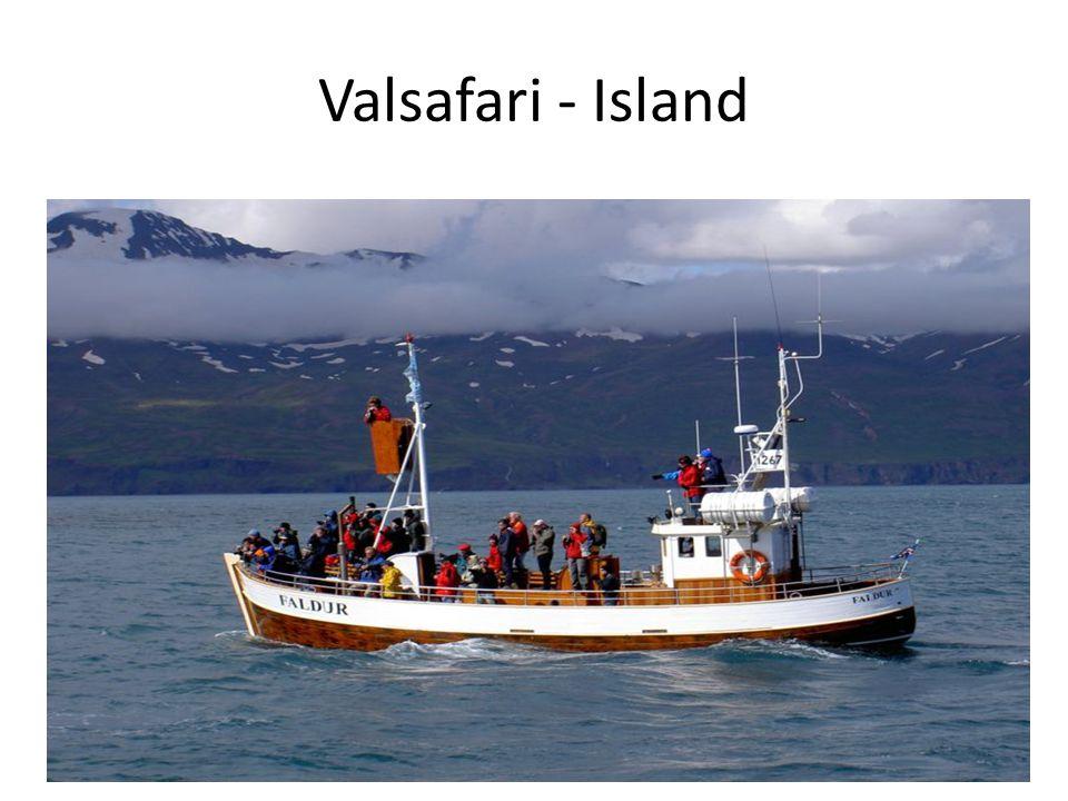 Valsafari - Island