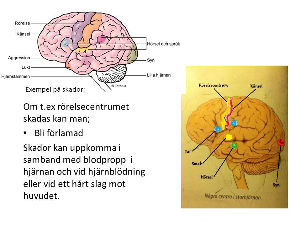 Om t.ex rörelsecentrumet skadas kan man; Bli förlamad Skador kan uppkomma i samband med blodpropp i hjärnan och vid hjärnblödning eller vid ett hårt s