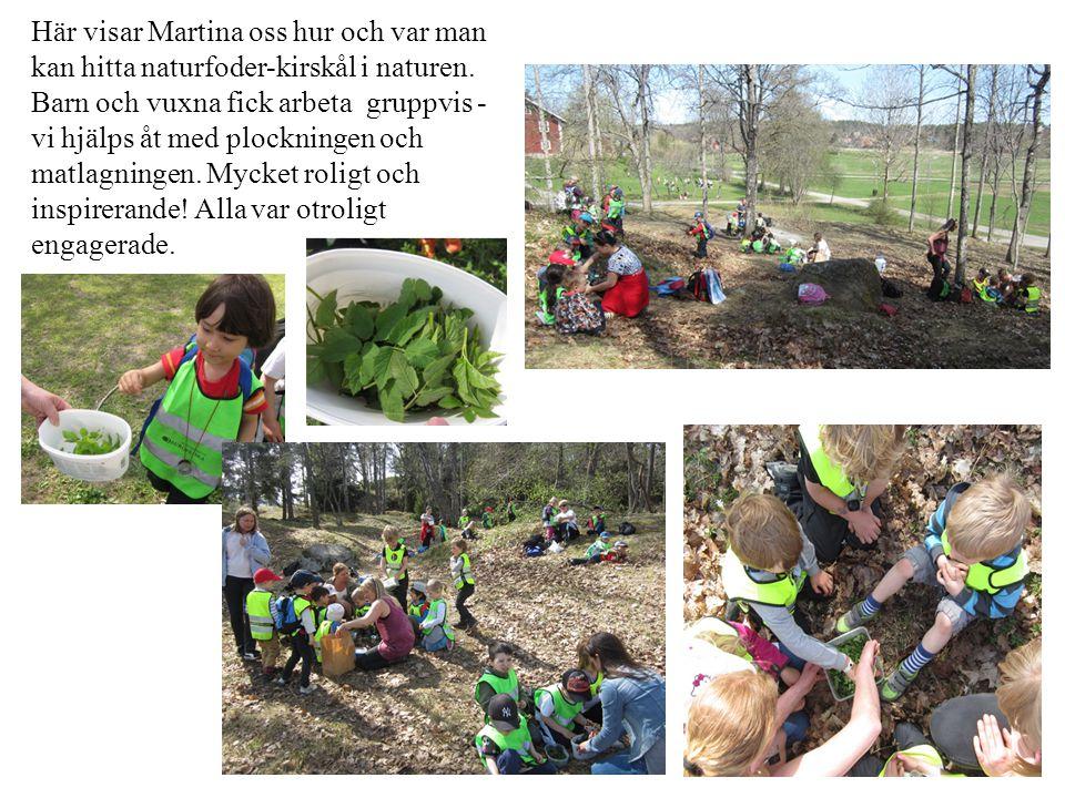 Här visar Martina oss hur och var man kan hitta naturfoder-kirskål i naturen. Barn och vuxna fick arbeta gruppvis - vi hjälps åt med plockningen och m