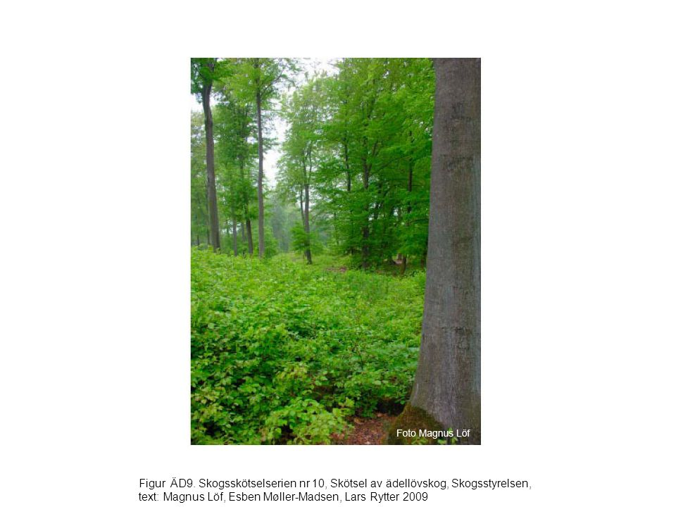 Figur ÄD9. Skogsskötselserien nr 10, Skötsel av ädellövskog, Skogsstyrelsen, text: Magnus Löf, Esben Møller-Madsen, Lars Rytter 2009