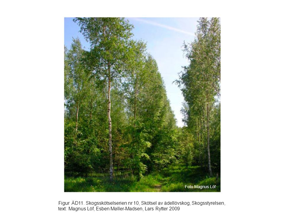 Figur ÄD11. Skogsskötselserien nr 10, Skötsel av ädellövskog, Skogsstyrelsen, text: Magnus Löf, Esben Møller-Madsen, Lars Rytter 2009