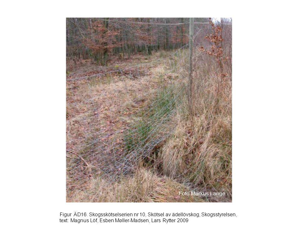 Figur ÄD16. Skogsskötselserien nr 10, Skötsel av ädellövskog, Skogsstyrelsen, text: Magnus Löf, Esben Møller-Madsen, Lars Rytter 2009