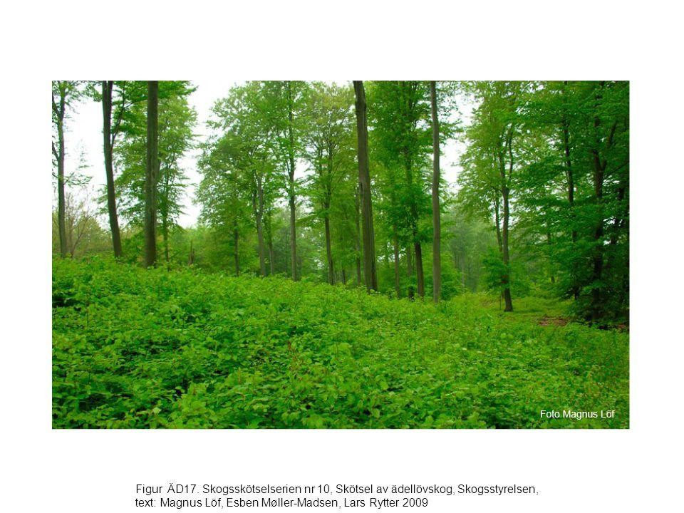Figur ÄD17. Skogsskötselserien nr 10, Skötsel av ädellövskog, Skogsstyrelsen, text: Magnus Löf, Esben Møller-Madsen, Lars Rytter 2009