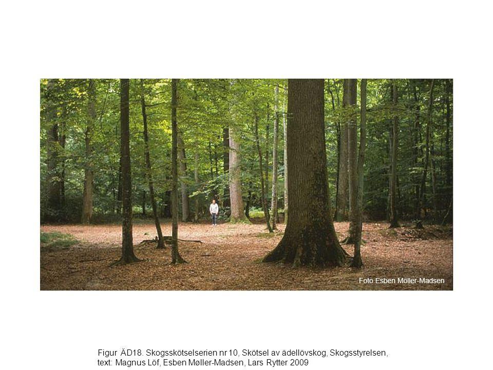 Figur ÄD18. Skogsskötselserien nr 10, Skötsel av ädellövskog, Skogsstyrelsen, text: Magnus Löf, Esben Møller-Madsen, Lars Rytter 2009