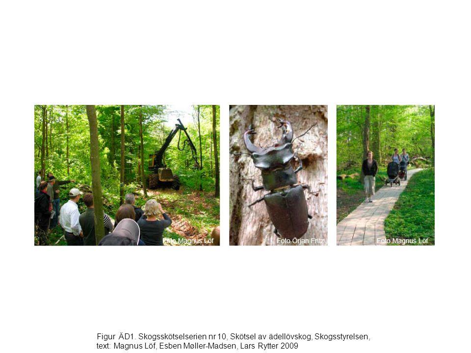 Figur ÄD1. Skogsskötselserien nr 10, Skötsel av ädellövskog, Skogsstyrelsen, text: Magnus Löf, Esben Møller-Madsen, Lars Rytter 2009