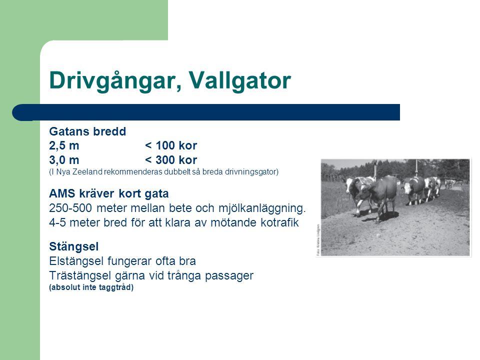 Drivgångar, Vallgator Gatans bredd 2,5 m< 100 kor 3,0 m< 300 kor (I Nya Zeeland rekommenderas dubbelt så breda drivningsgator) AMS kräver kort gata 25