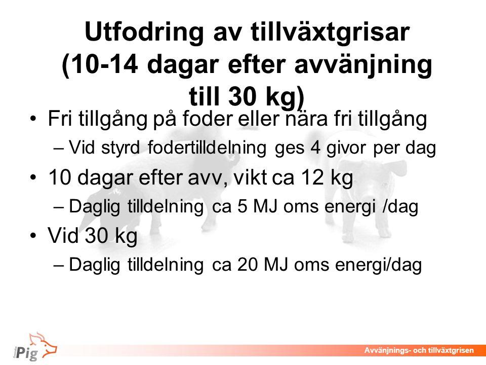 Avvänjnings- och tillväxtgrisen Utfodring av tillväxtgrisar (10-14 dagar efter avvänjning till 30 kg) Fri tillgång på foder eller nära fri tillgång –V
