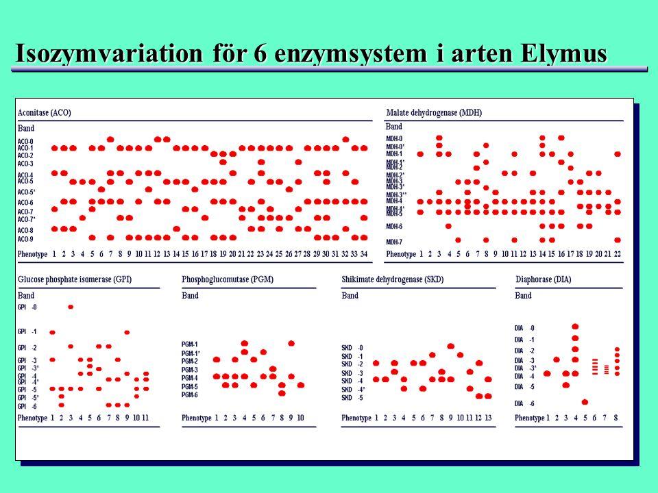 Isozymvariation för 6 enzymsystem i arten Elymus