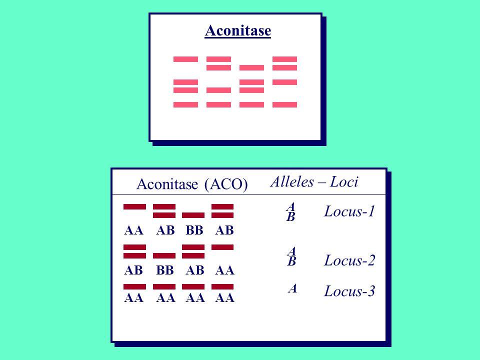 Alleles – Loci Locus-1 Locus-2 Locus-3 ABAB ABAB Aconitase (ACO) AAABBBAB BBABAA A Aconitase