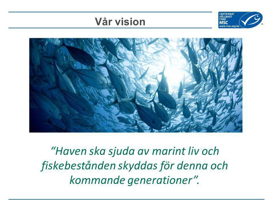 """Vår vision """"Haven ska sjuda av marint liv och fiskebestånden skyddas för denna och kommande generationer""""."""