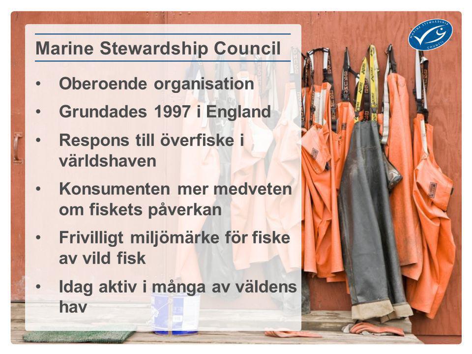 Oberoende organisation Grundades 1997 i England Respons till överfiske i världshaven Konsumenten mer medveten om fiskets påverkan Frivilligt miljömärke för fiske av vild fisk Idag aktiv i många av väldens hav Marine Stewardship Council