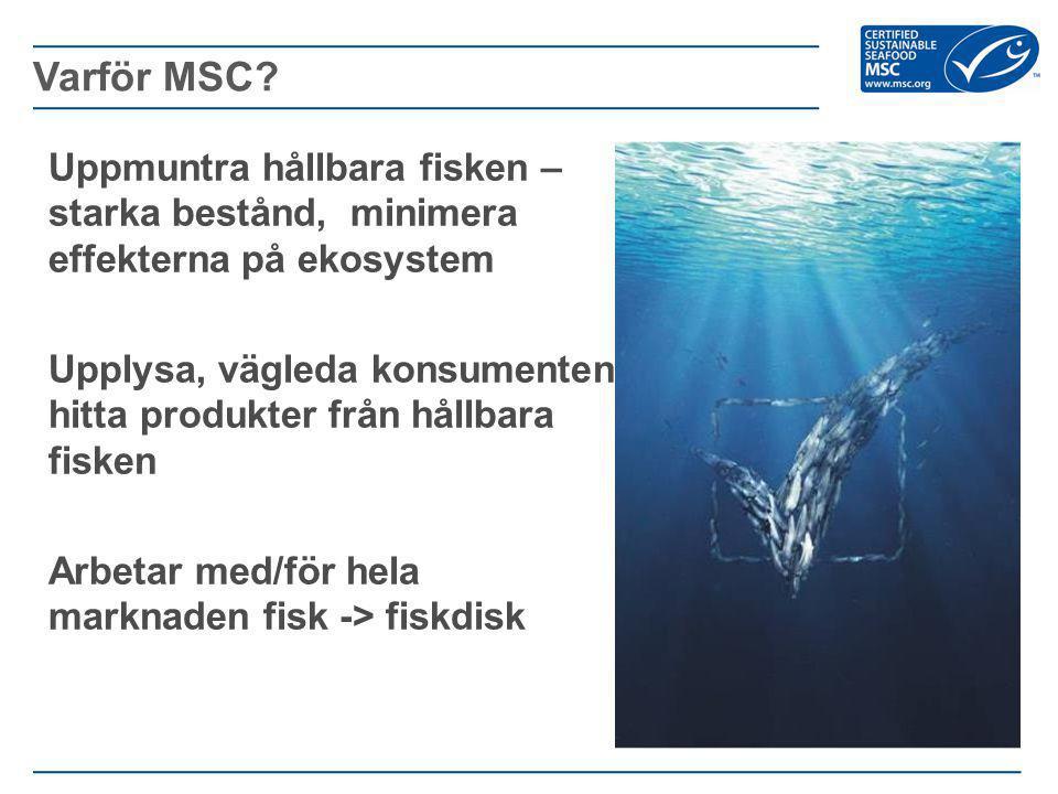 - Sätter standarder Utvecklat standarder för hållbart fiske och spårning av fiskprodukter - Vägleder yrkesfiskare och fisken Uppmuntrar hållbara fisken och skapar en marknad för deras produkter sporras även övriga fisken att bli mer hållbara - Upplysa försäljare och konsumenter MSC samarbetar med hela fiskeribranschen för att möta konsumenternas krav på produkter.