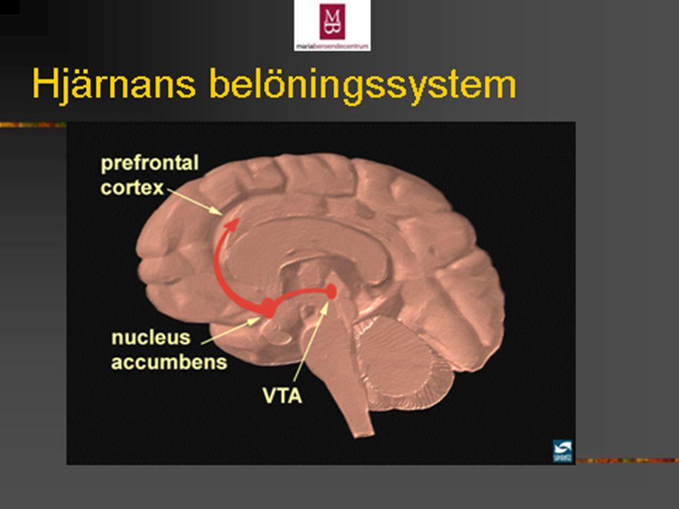 Dopamin Hjärnans belöningssystem. Lustupplevelsen framkallas av dopamin Alkohol ökar dopaminmängden