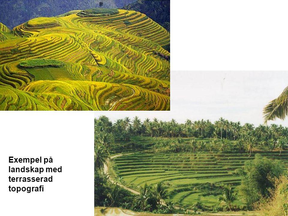 Exempel på landskap med terrasserad topografi