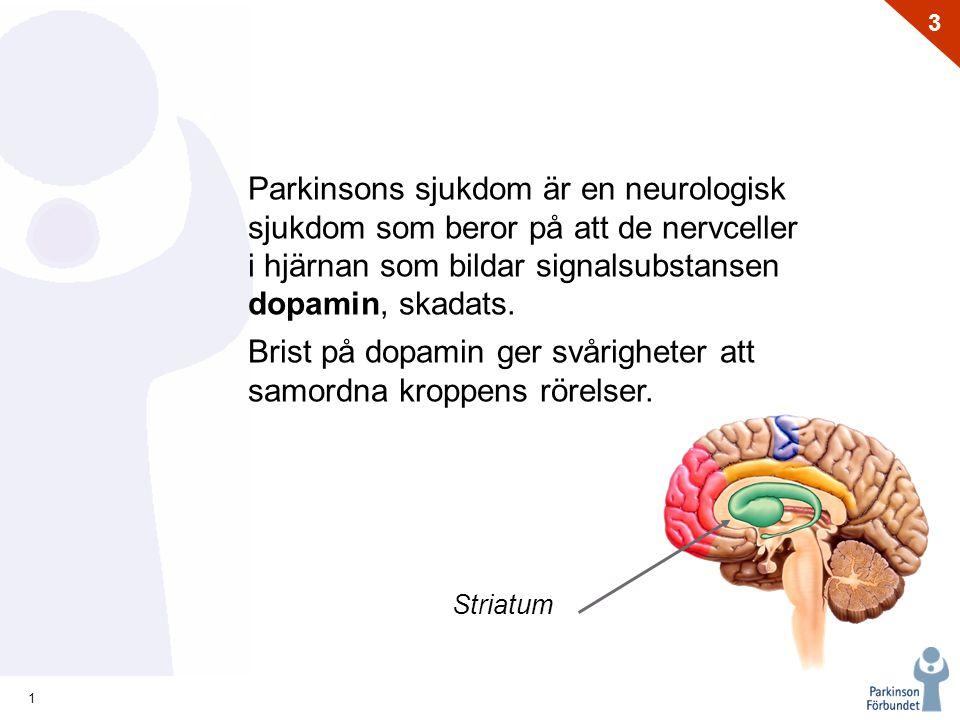 1 3 Striatum Parkinsons sjukdom är en neurologisk sjukdom som beror på att de nervceller i hjärnan som bildar signalsubstansen dopamin, skadats. Brist
