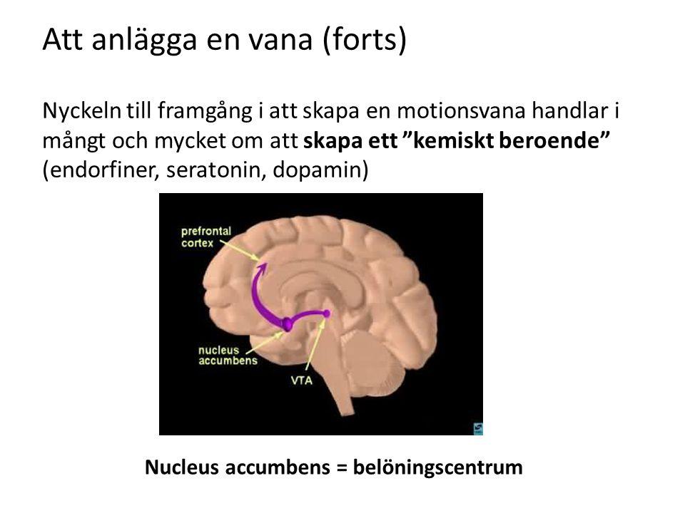 Att anlägga en vana (forts) Nyckeln till framgång i att skapa en motionsvana handlar i mångt och mycket om att skapa ett kemiskt beroende (endorfiner, seratonin, dopamin) Nucleus accumbens = belöningscentrum