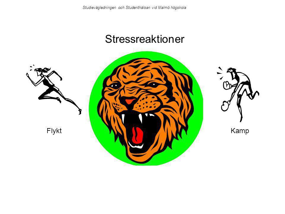 Stressreaktioner FlyktKamp Studievägledningen och Studenthälsan vid Malmö högskola