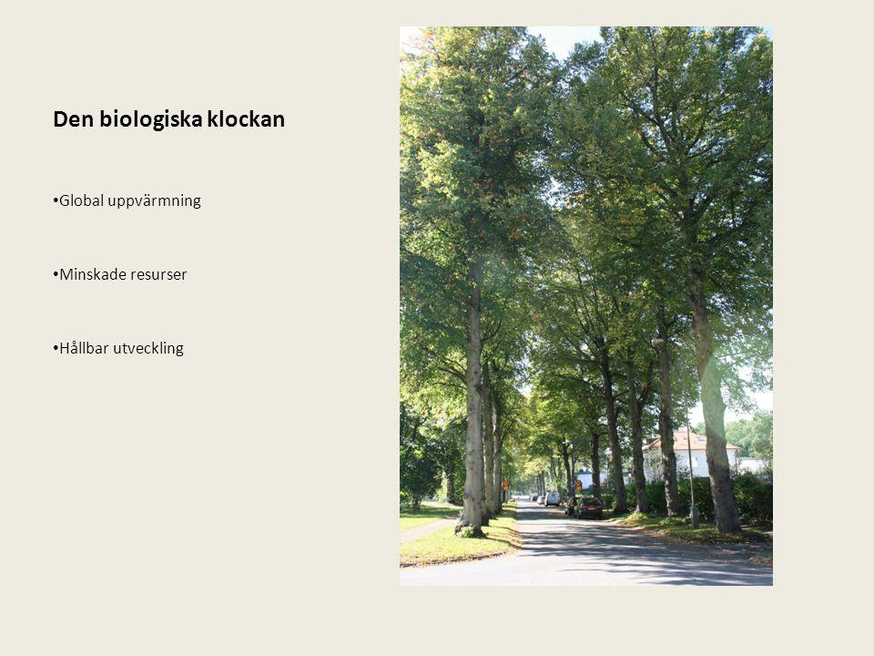 Luftrörelse & hastighet SKOG Träd fungerar som hinder i luftens rörelse Påverkar riktningen Skog är ett stort hinder och luften flyter sig över den Vindhastigheten är dämpad under en kort distans Skyddat område kort (blå streck) TRÄD I RAD Mer öppet hinder Porösa trädkronor Skyddat område är större (blå streck) (Bilder: Trees relief for the city s.18-19)