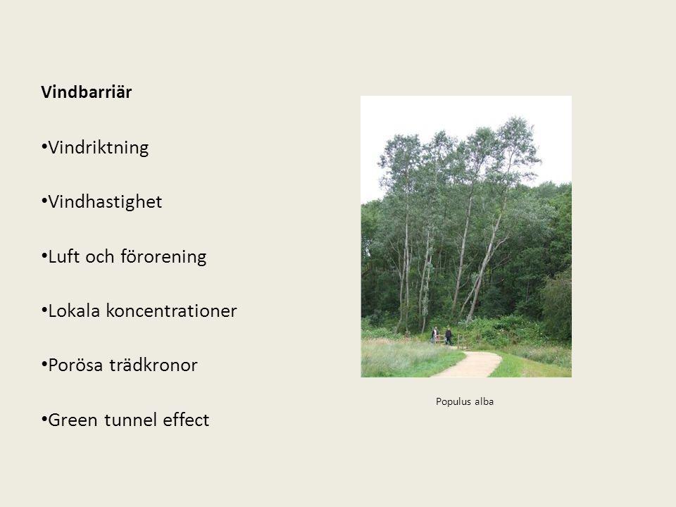 Vindbarriär Vindriktning Vindhastighet Luft och förorening Lokala koncentrationer Porösa trädkronor Green tunnel effect Populus alba