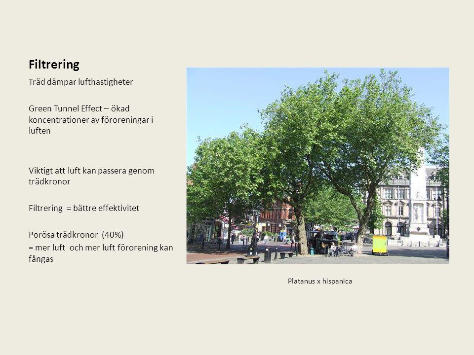 Filtrering Träd dämpar lufthastigheter Green Tunnel Effect – ökad koncentrationer av föroreningar i luften Viktigt att luft kan passera genom trädkron