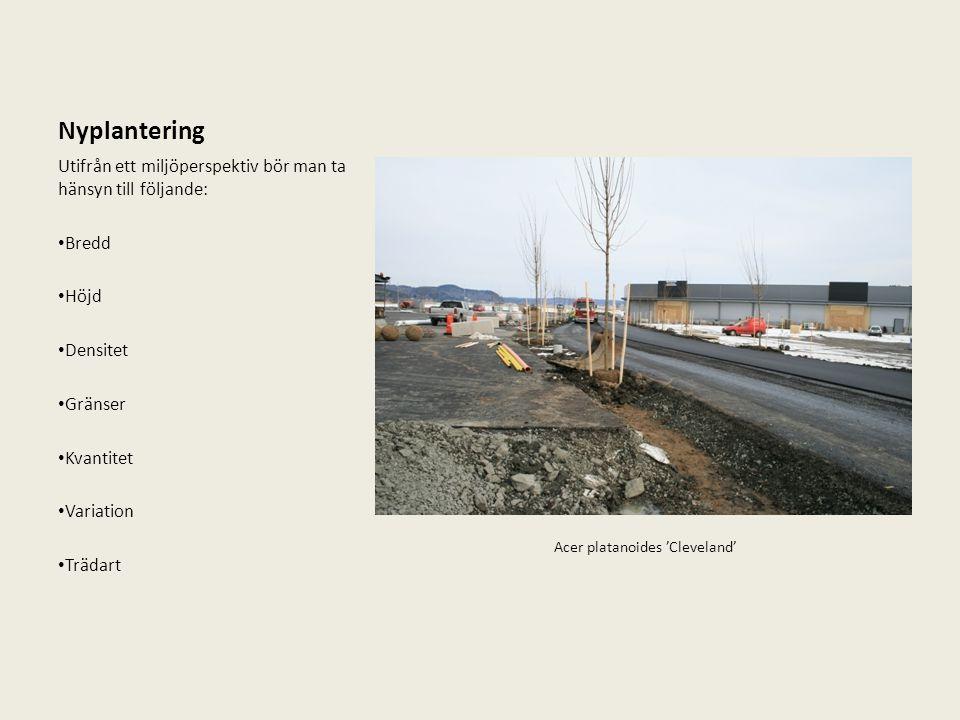 Nyplantering Utifrån ett miljöperspektiv bör man ta hänsyn till följande: Bredd Höjd Densitet Gränser Kvantitet Variation Trädart Acer platanoides 'Cl