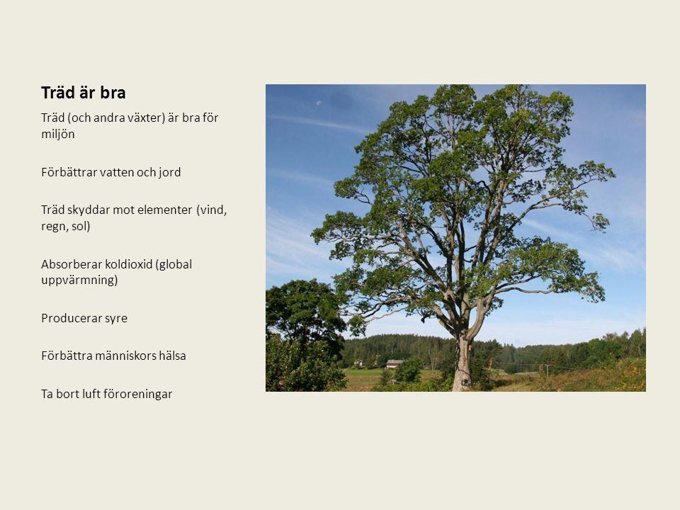 Träd är bra Träd (och andra växter) är bra för miljön Förbättrar vatten och jord Träd skyddar mot elementer (vind, regn, sol) Absorberar koldioxid (gl