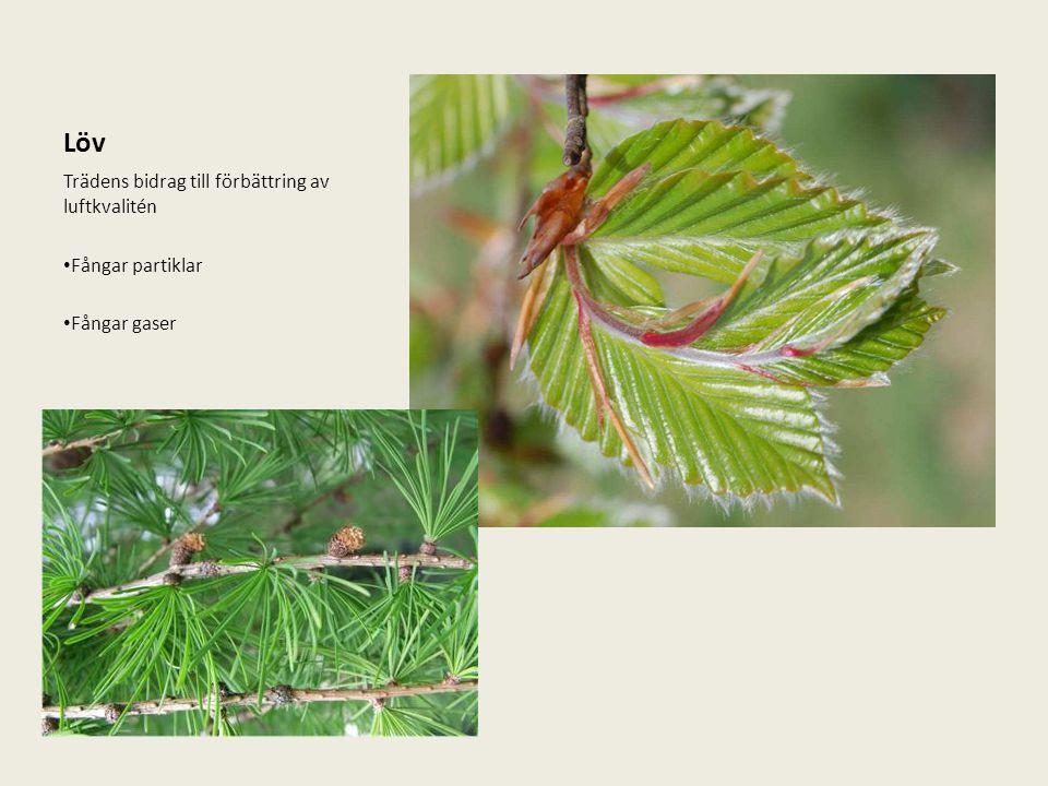 Löv Trädens bidrag till förbättring av luftkvalitén Fångar partiklar Fångar gaser