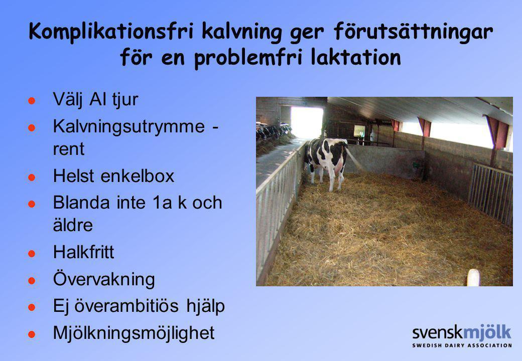 Komplikationsfri kalvning ger förutsättningar för en problemfri laktation Välj AI tjur Kalvningsutrymme - rent Helst enkelbox Blanda inte 1a k och äld