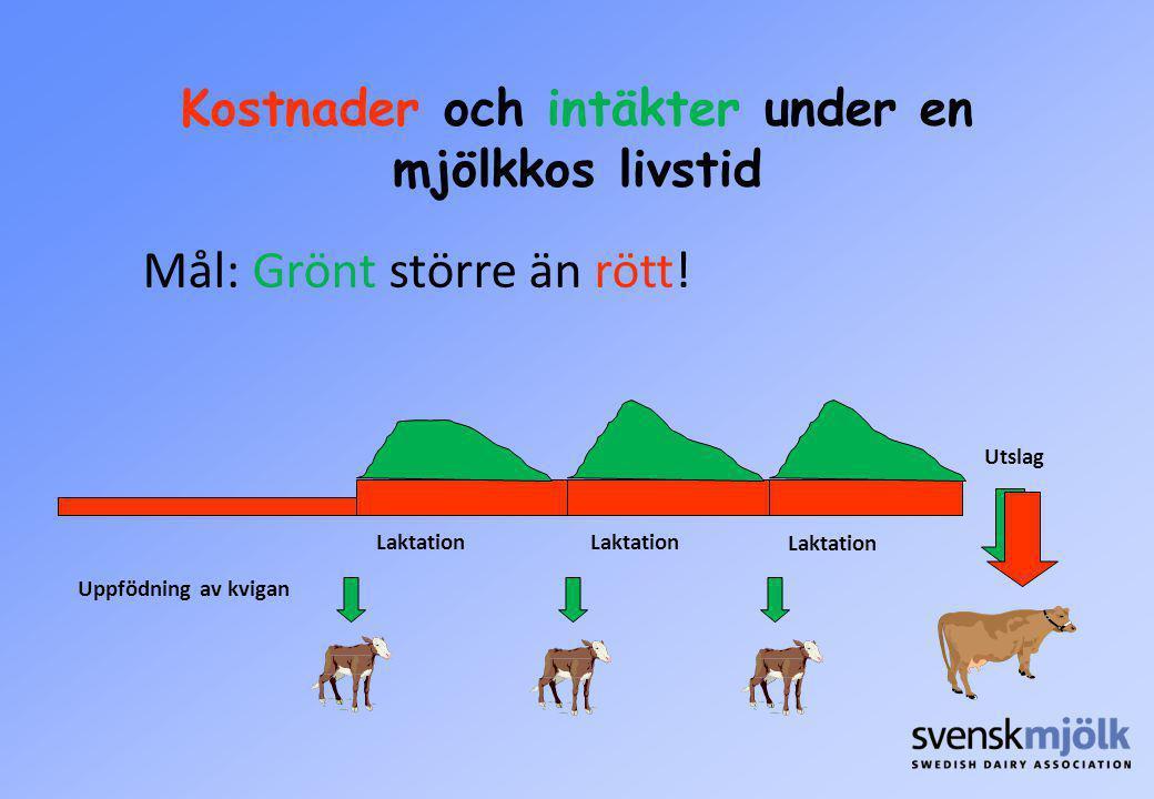 Kostnader och intäkter under en mjölkkos livstid Uppfödning av kvigan Laktation Mål: Grönt större än rött! Utslag