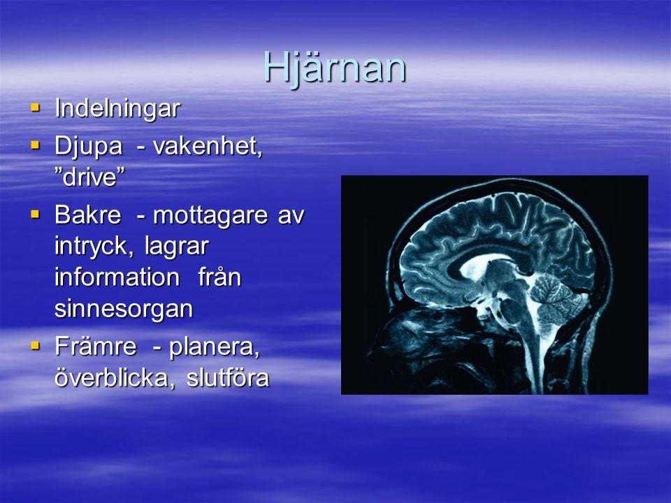 """Hjärnan  Indelningar  Djupa - vakenhet, """"drive""""  Bakre - mottagare av intryck, lagrar information från sinnesorgan  Främre - planera, överblicka,"""