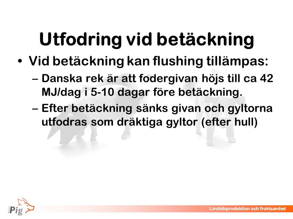 Livstidsproduktion och fruktsamhet Utfodring vid betäckning Vid betäckning kan flushing tillämpas: –Danska rek är att fodergivan höjs till ca 42 MJ/da