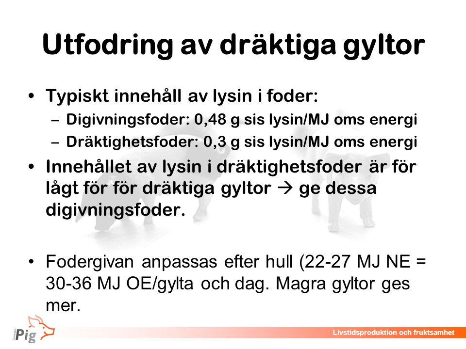 Livstidsproduktion och fruktsamhet Utfodring av dräktiga gyltor Typiskt innehåll av lysin i foder: –Digivningsfoder: 0,48 g sis lysin/MJ oms energi –D