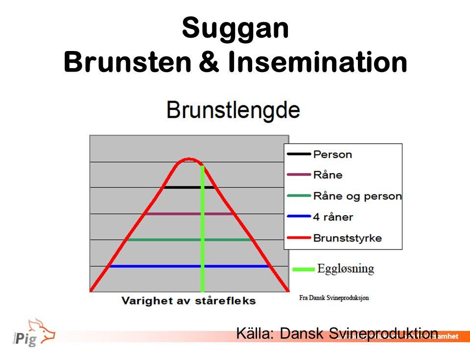 Livstidsproduktion och fruktsamhet Suggan Brunsten & Insemination Källa: Dansk Svineproduktion