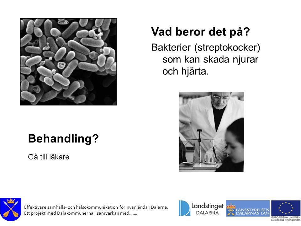 Effektivare samhälls- och hälsokommunikation för nyanlända i Dalarna. Ett projekt med Dalakommunerna i samverkan med……. Vad beror det på? Bakterier (s