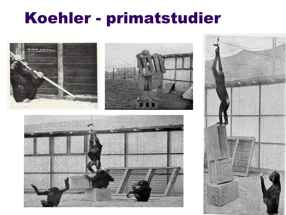 Koehler - primatstudier