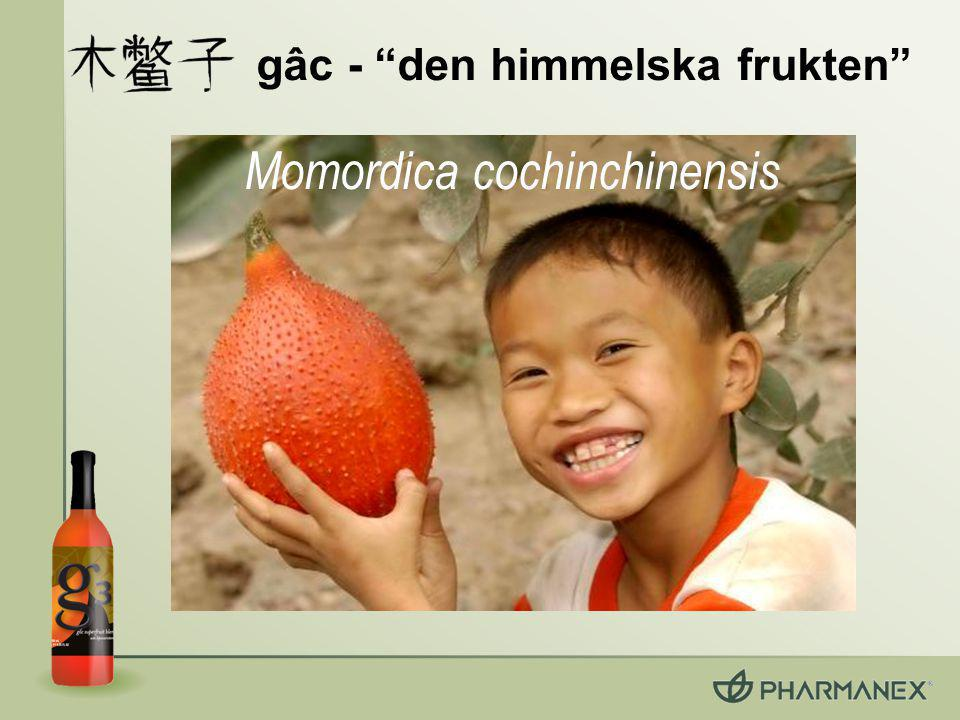 gâc - den himmelska frukten Momordica cochinchinensis