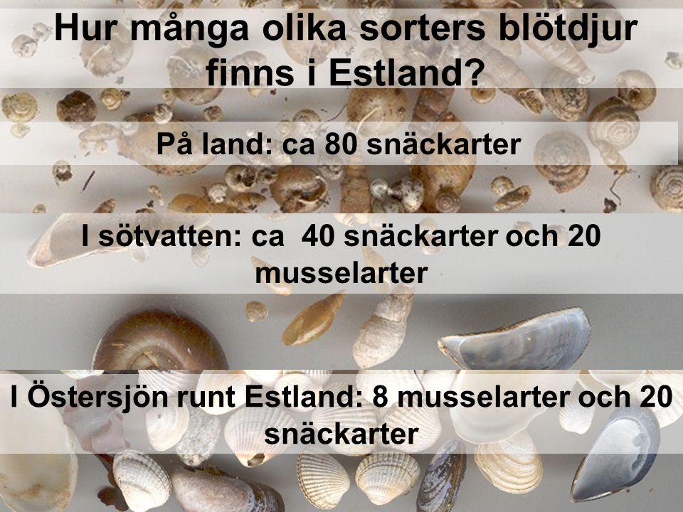 Hur många olika sorters blötdjur finns i Estland? På land: ca 80 snäckarter I sötvatten: ca 40 snäckarter och 20 musselarter I Östersjön runt Estland: