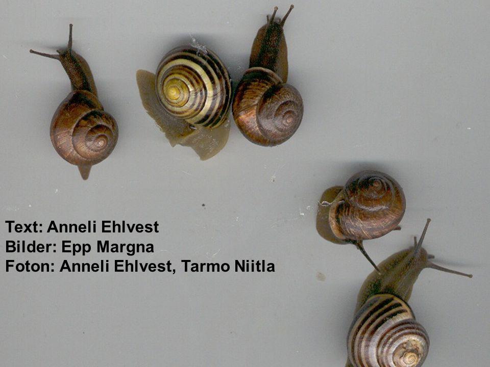 Text: Anneli Ehlvest Bilder: Epp Margna Foton: Anneli Ehlvest, Tarmo Niitla