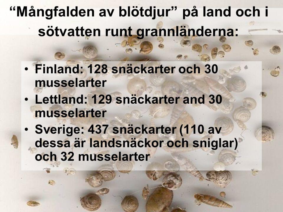 """""""Mångfalden av blötdjur"""" på land och i sötvatten runt grannländerna: Finland: 128 snäckarter och 30 musselarter Lettland: 129 snäckarter and 30 mussel"""