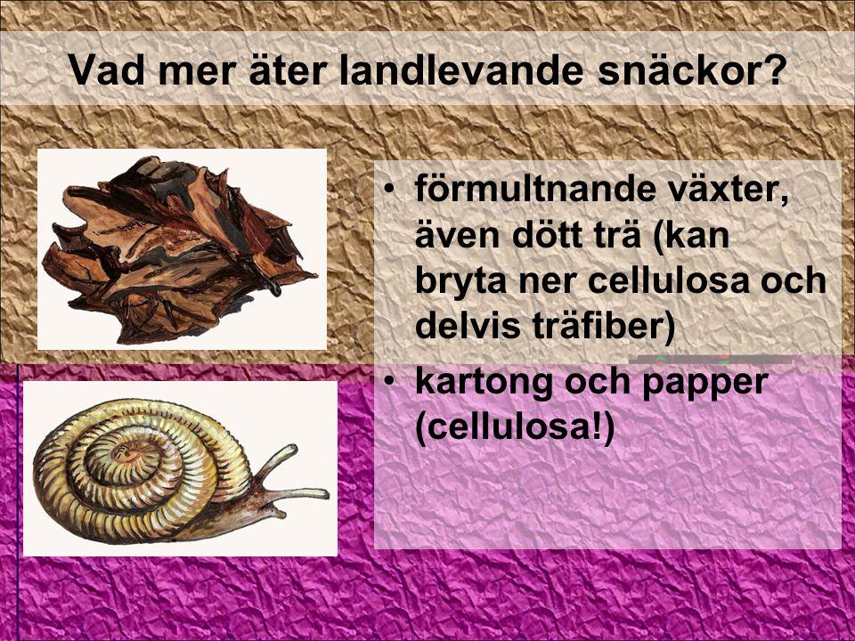 Vad mer äter landlevande snäckor? förmultnande växter, även dött trä (kan bryta ner cellulosa och delvis träfiber) kartong och papper (cellulosa!)