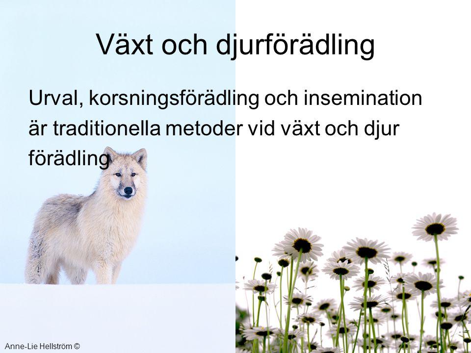 Växt och djurförädling Urval, korsningsförädling och insemination är traditionella metoder vid växt och djur förädling Anne-Lie Hellström ©