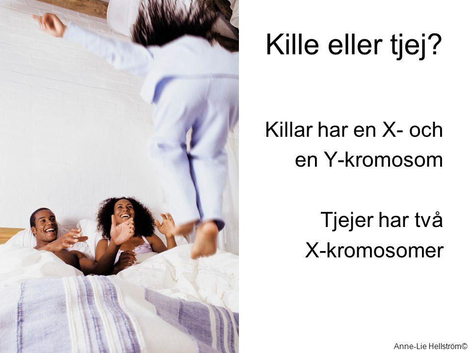 Kille eller tjej? Killar har en X- och en Y-kromosom Tjejer har två X-kromosomer Anne-Lie Hellström©
